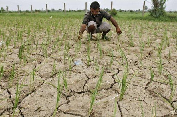 همایش مدیریت کشاورزی باکاربرد الگوی زراعی در همدان برگزار می گردد